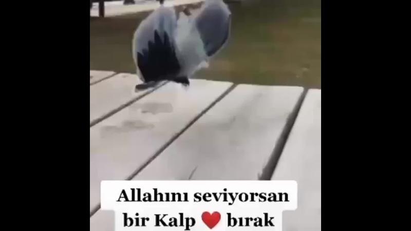 Hayırlı sabahlar _kaaba__heart_️ . . . - allah Beğen kaydet _envelope_with_arrow__pray_ yorumlar değerlidir _tulip_ . . ( 480 X