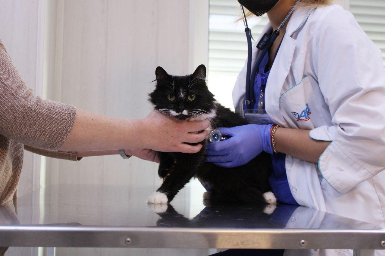 В Таганроге и области пройдет традиционный день льготной стерилизации собак и кошек
