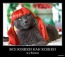 Фотоальбом Анастасии Будорацкой