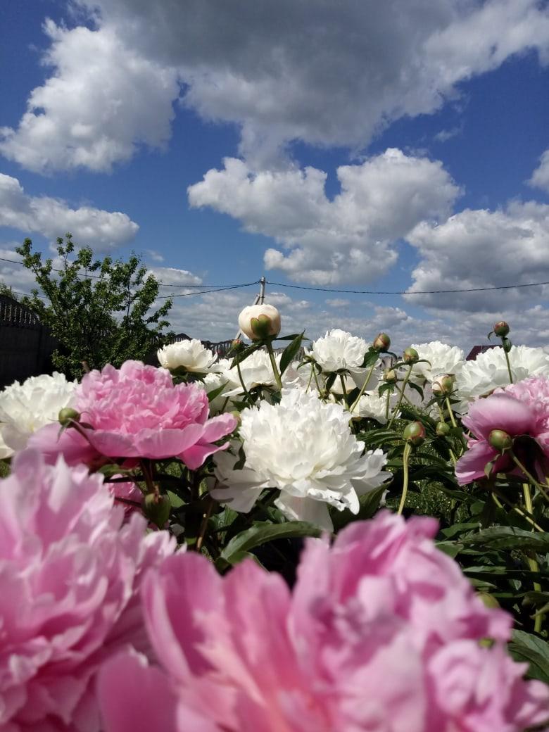 фото из альбома Ольги Белки №11
