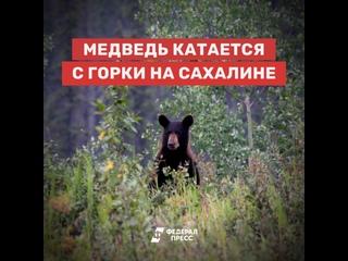 Медведь катается с горки на Сахалине