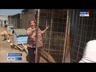 Видео от Тамары Вакуленко