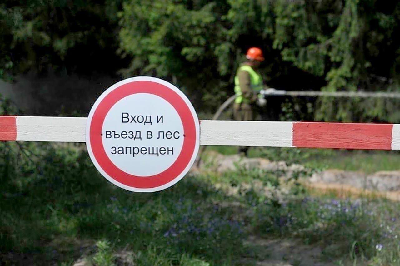 В Удмуртии снова введён запрет на посещение лесов