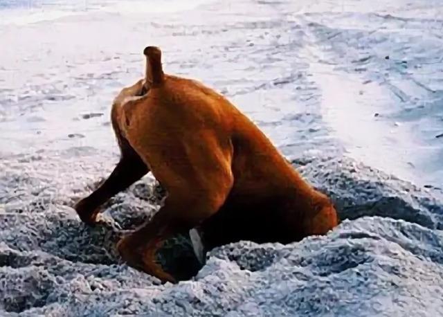 Почему собаки зарывают кости в землю?