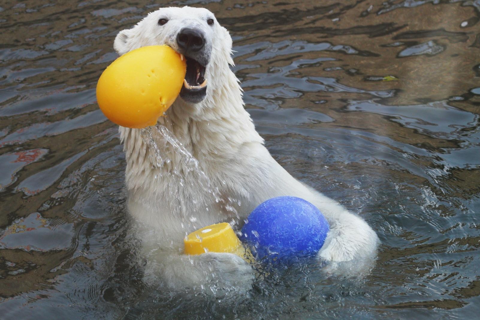 Фото: пресс-служба Ленинградского зоопарка