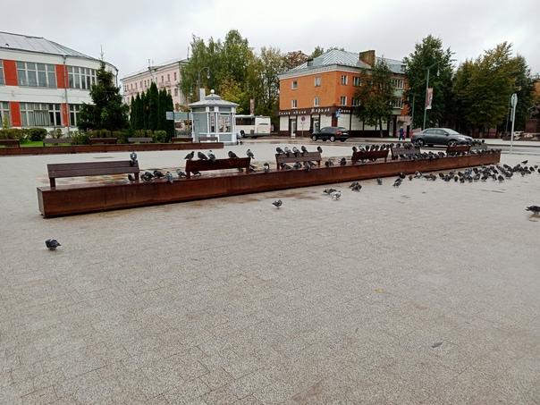 Заботливые голуби и людям оставили место😊...