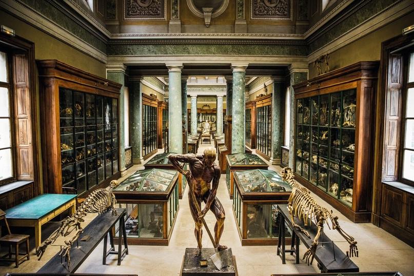 Медицинский факультет Монпелье — анатомический музей. (листать фото по стрелке)