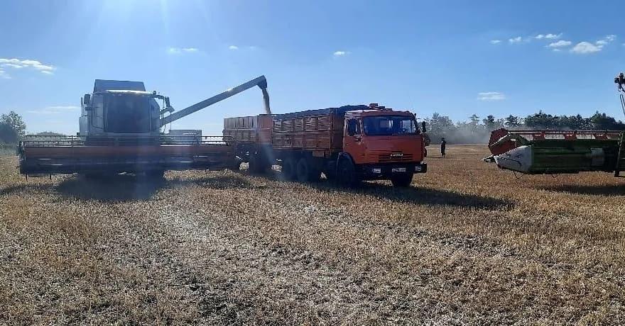 """Аграрии СПК """"Нива"""" первыми в Петровском районе начали убирать озимую пшеницу"""
