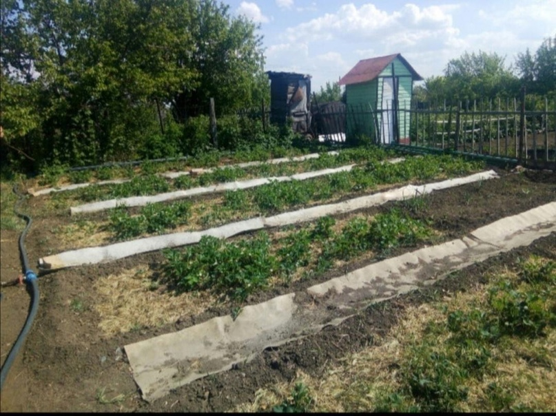Купить садовый участок 6 сот. на Елшанке | Объявления Орска и Новотроицка №28739