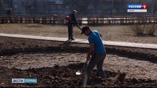 В Ивовом сквере высадят новые деревья