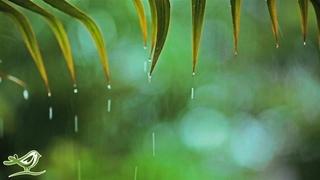 Relaxing Music & Soft Rain Sounds: Relaxing Piano Music, Sleep Music, Peaceful Music ★148