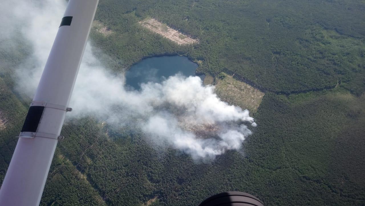 В лесах марийского края сохраняется высокая пожароопасность
