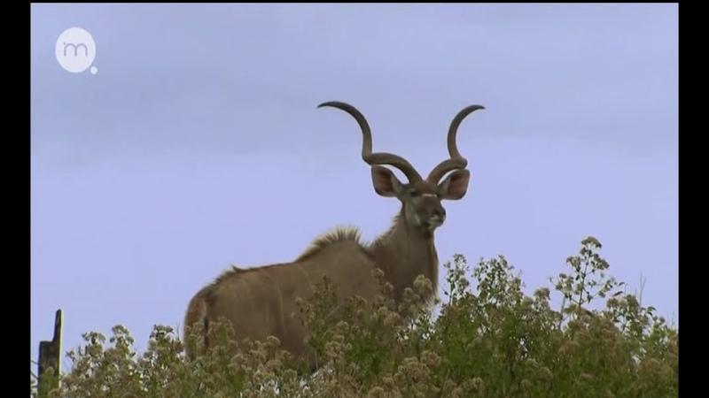 Берег чудес Документальный фильм BBC Дикая природа берегов Южной Африки
