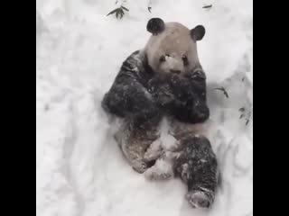 Счастливая панда