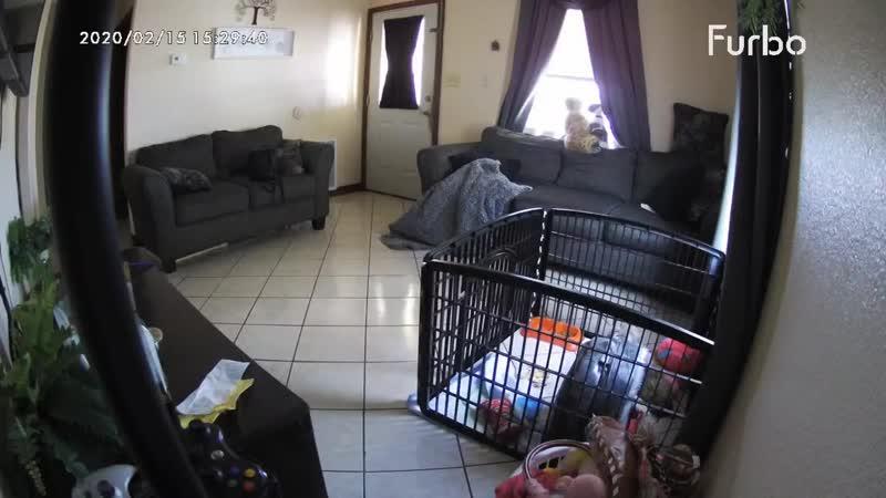 Собаки играют с призраками пока хозяйки нет дома