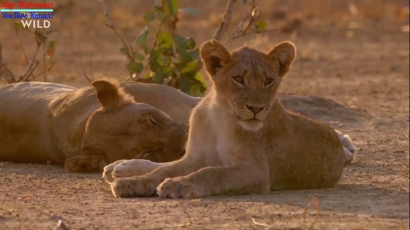 Африканские охотники Фильм Братья по Оружию