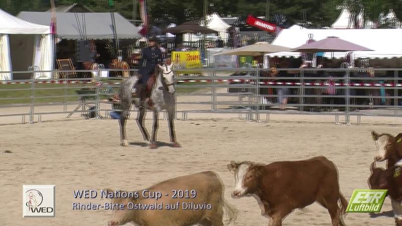 Working Equitation Pferd International 2019 Cow Trial Birte Ostwald Diluvio