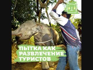 Почему нельзя кататься на слонах