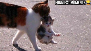 FUNNY CAT VİDEOS 😹 - CAT VİDEOS 2021 - THE MOST FUNNY VIDEOS OF MARCH 😂
