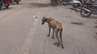 Moving skeleton dog transforms after rescue.