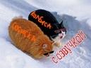 Приколы с котами с ОЗВУЧКОЙ – ПОПРОБУЙ НЕ ЗАСМЕЯТЬСЯ - ТЕСТ НА ПСИХИКУ 2018 - Смешные коты и кошки