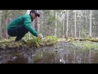 Почему нельзя ступать в лужу в лесу gjxtve ytkmpz cnegfnm d ke;e d ktce